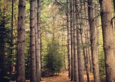 Black Forest Park